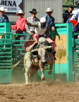 Bull Busting Stock 09 by Rejects-Stock