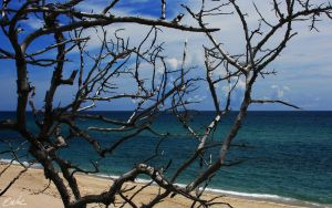 Beach Branch by wolmers
