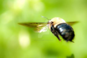 bee flies by by digidreamgrafix