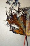 decay - two by jeanbeanxoxo