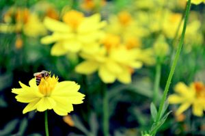 Bee and Flower by cazt1811