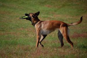 Frisbee by MauserGirl
