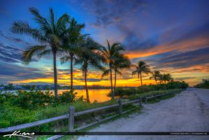 Coconut-Trees-along-Waterway-on-Jupiter-Island-at- by CaptainKimo