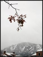 First Snow by ThePatriarch