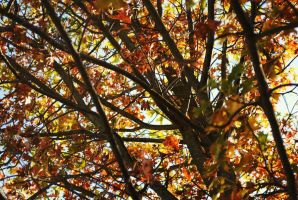 Fall Colors 1 by xNocturneMelodyx