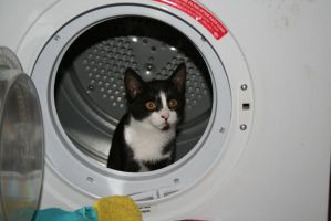 Fluff in the Tumble Dryer by tammyins