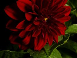 Red on Green by webcruiser