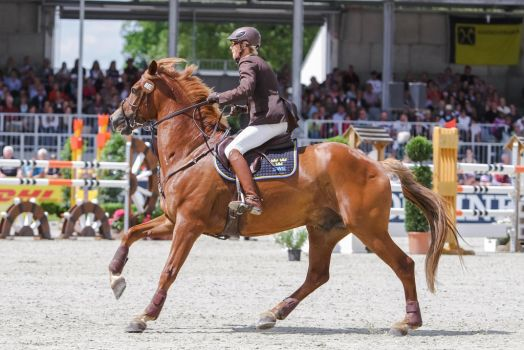 ISH Gelding Clover Cantering Side View by LuDa-Stock