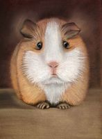 guinea pig by lomaxart
