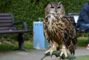 Owl @ Conwy by friartuck40