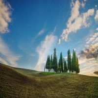 On Wave with cypress by JPawlak