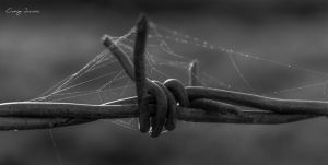 Web on wire-1 by Craig-PhotoWork