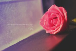 26/365 Life is the flower for which love is the ho by ceesevenmarzartworks