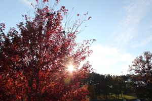 Red Leaves, Sun, and Sky by Drake729