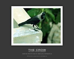 The Crow by aash