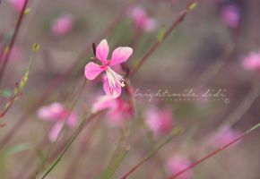 Beautiful Gaura by Brightsmile-didi