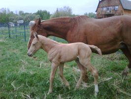 My first baby foal, Pinoca by CatcherOfDreamss