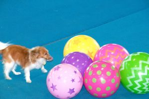 Treibball II by LDFranklin