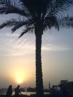 Palm tree in sunset by Magdyas