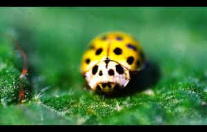 Lady BUG by John77