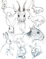 Bunny Sketches by HeidiArnhold