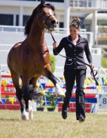 STOCK - Gold Coast show 244 by fillyrox