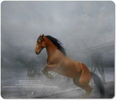 horse on beach (used) by JuneButterfly-stock