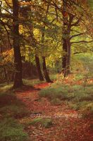 magic forest No.14 by landscapesaxony