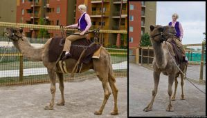 Heck Yes Camel by PrettyKitty