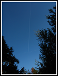 Plane over a forest by TRWA
