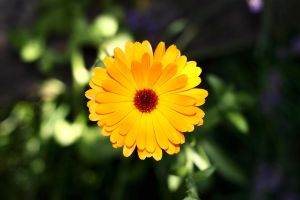Yellow by marcialbollinger