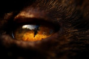 Cats Eye by waggysue