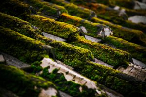 Old Roof by bleaches
