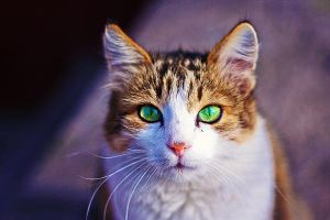 greeneyed by Emmatyan