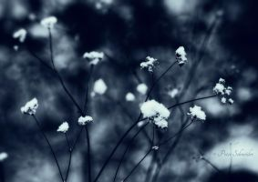 Snow flowers. by Phototubby