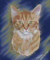 Mr. Oliver Kitty by Gymnart