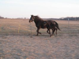 Mare and foal running: STOCK by Lythre-does-photos