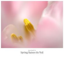 Spring Raises its Veil by signmeupscotty
