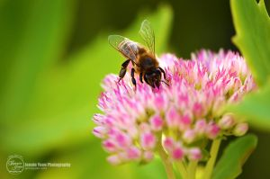 Collecting Nectar by sweetcivic