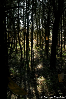 Story of the forrest by Lott-photo