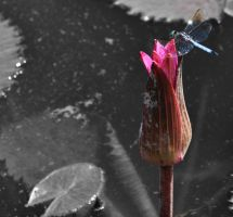 Flower with Dragon Fly by ladybug95