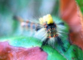 Hippy caterpillar by Mark-Allison
