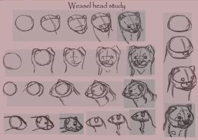 Weasel head study by Tianithen
