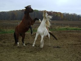 Turner Rearing horse stock by Secrets-Stock