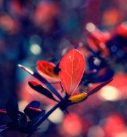 coldy red. by Altingfest