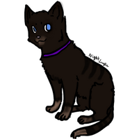 Cat Blinking animation test ouo by NightLupe