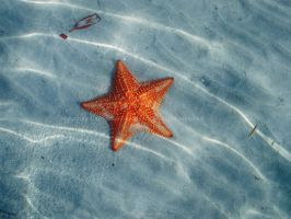 Starfished by andreax2610