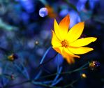 Blue and Yellow 2 by jg244