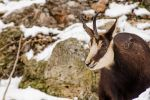 Cheese! ( chamois ) by Mavrakis-Portraits