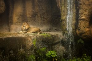 The Lion's Den by Kendra-Paige